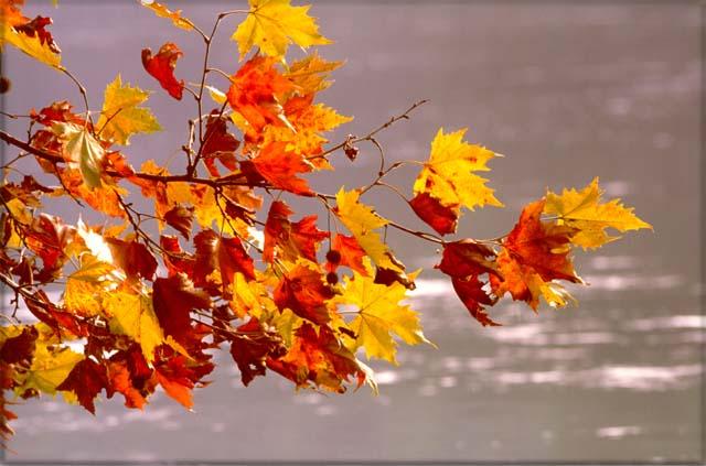 autunno.jpg (640×423)